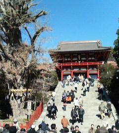 鎌倉・鶴ケ丘八幡宮〜昼食