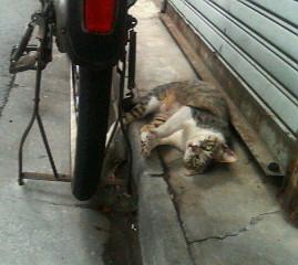 猫、涼んでます