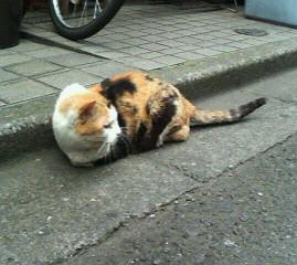 神楽坂の猫2